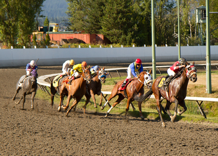Deighton Cup 2013 horse races