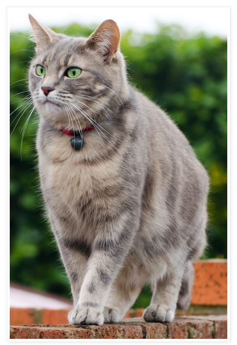 Kissakuvat