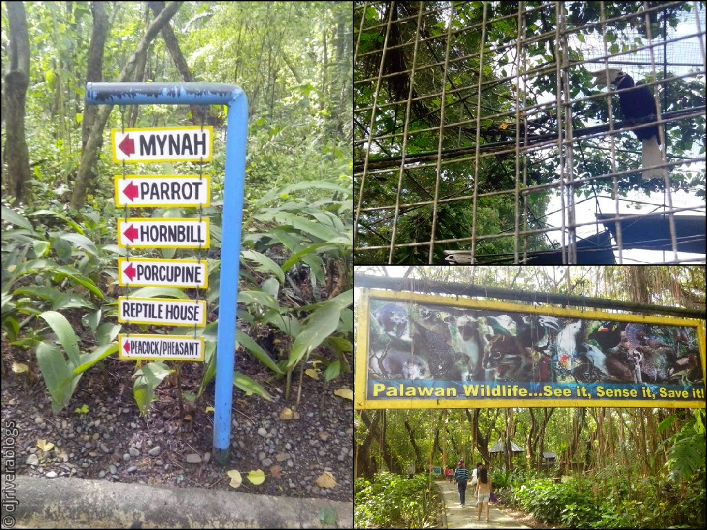 Animal Species in Palawan Wildlife
