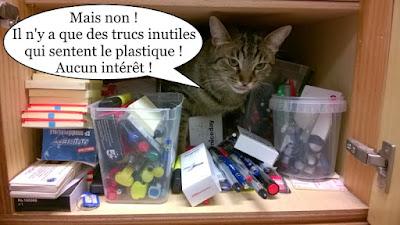 Une chatte tigrée rangée avec les stylos.