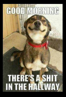 Dog Humor : And A Good Morning Too YOU..