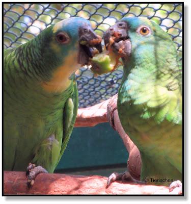 Papageien im Tierpark Köthen