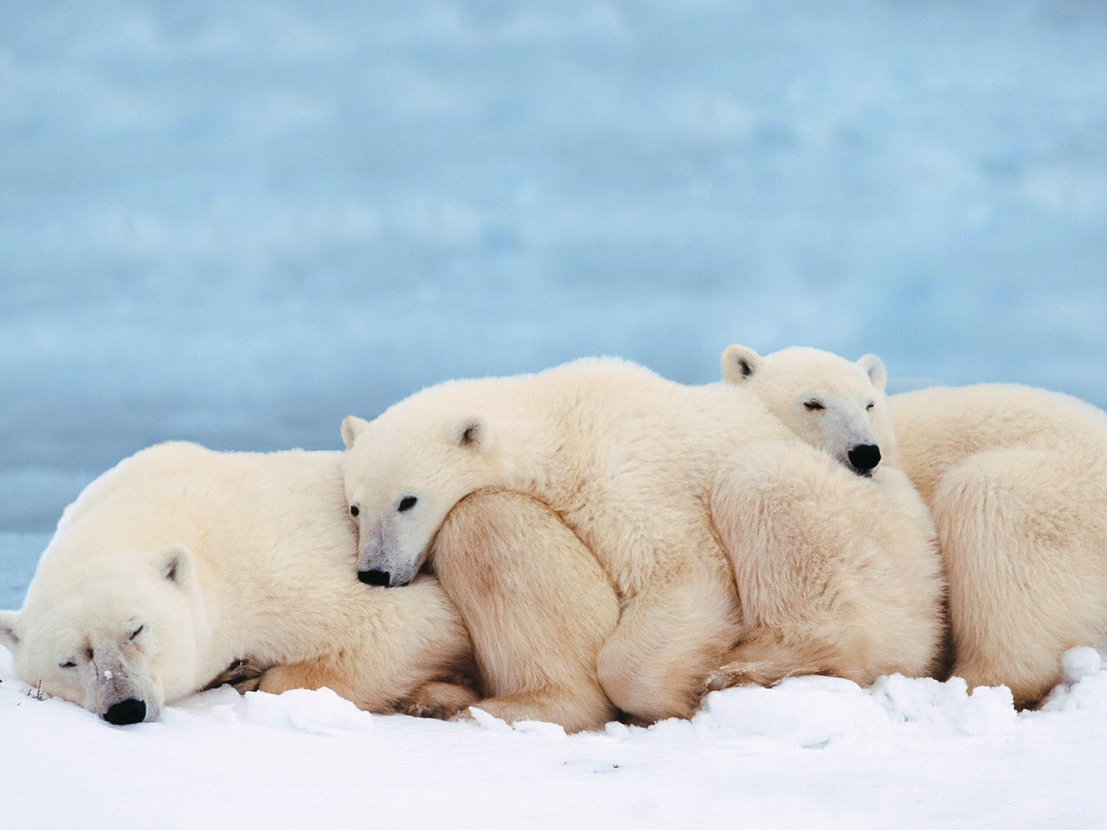 Animals' Own World: Beautiful Pictures And Wallpapers Of