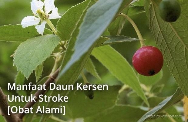 manfaat daun kersen untuk stroke