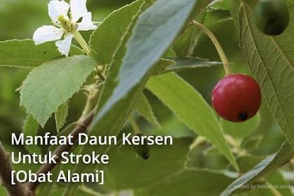 Manfaat Daun Kersen Untuk Stroke, Ternyata untuk Obat Alami!