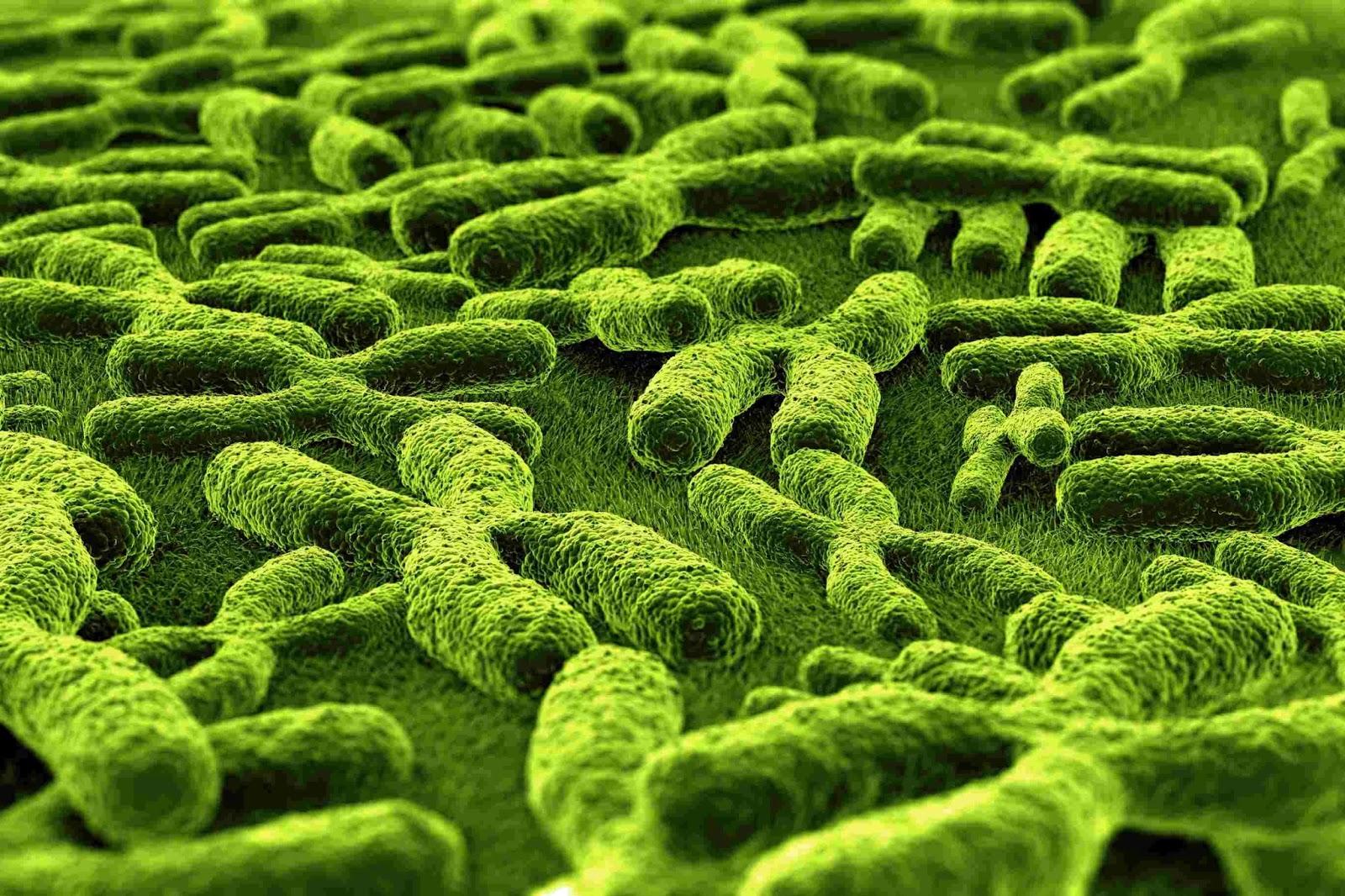 Biologi Gonzaga Pengayaan Biologi Bekal Osn