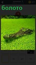 800 слов в болоте плавает крокодил, одна голова видна 3 уровень