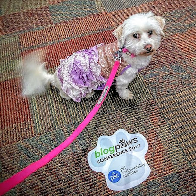I'm a FINALIST in the BlogPaws Nose To Nose Pet Blogging & Social Media Awards! My dogs Icy & Phoebe are inspiration for my blog.  Pets are welcome at the BlogPaws Conference!
