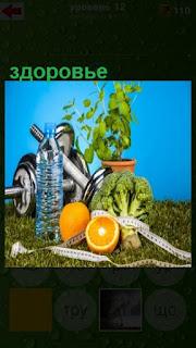 штанга, бутылка воды, фрукты для здорового образа жизни