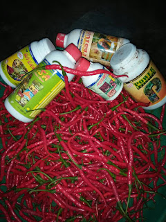 http://agenpupuknasa1.blogspot.com/2017/05/distributor-supernasa-di-pekanbaru.html
