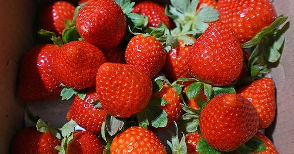 新竹新埔。春泉草莓園。2018來新埔採草莓~   西西烹飪筆記