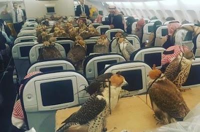 dubai-airoplane-aircraft-pets