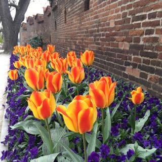prague czech republic wanderlust travelblog europe prague castle flowers spring