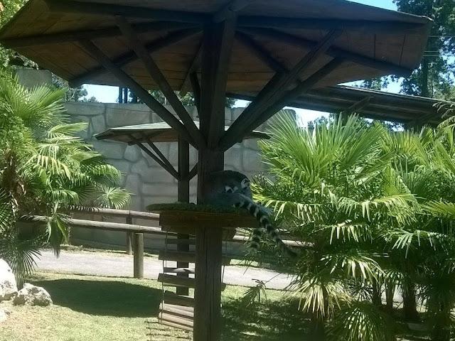 Lemuri Zoo Pombia
