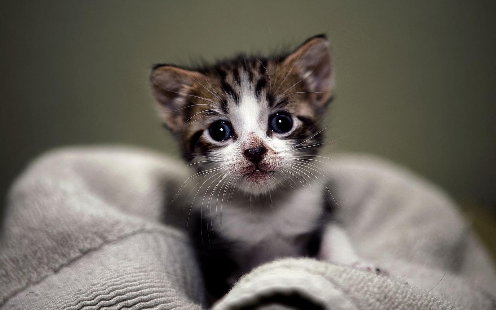 Cute Pet Images For Whatsapp Dp Pet S Gallery