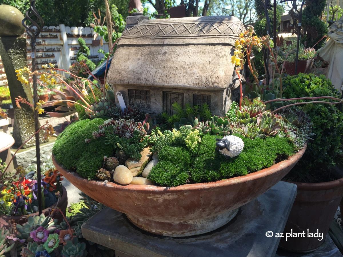 Drought tolerant fairy gardens ramblings from a desert garden - Fairy garden containers ...