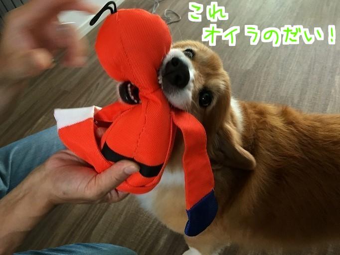 オレンジレンジャーと風太03