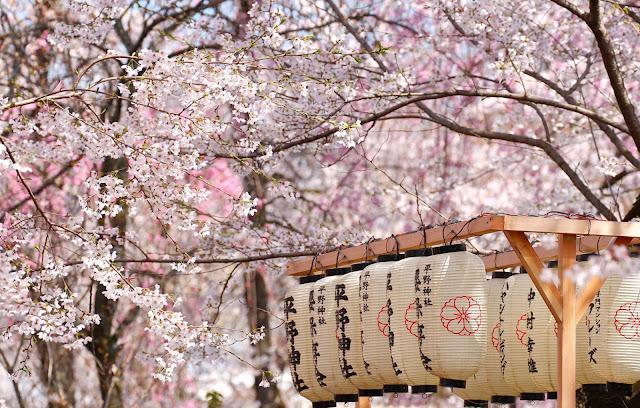 Hoa anh đào (Sakura)