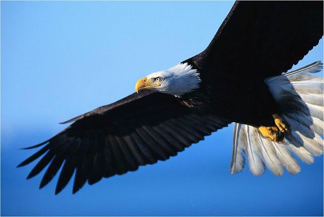 Soñar con un águilas ¿Que significa?