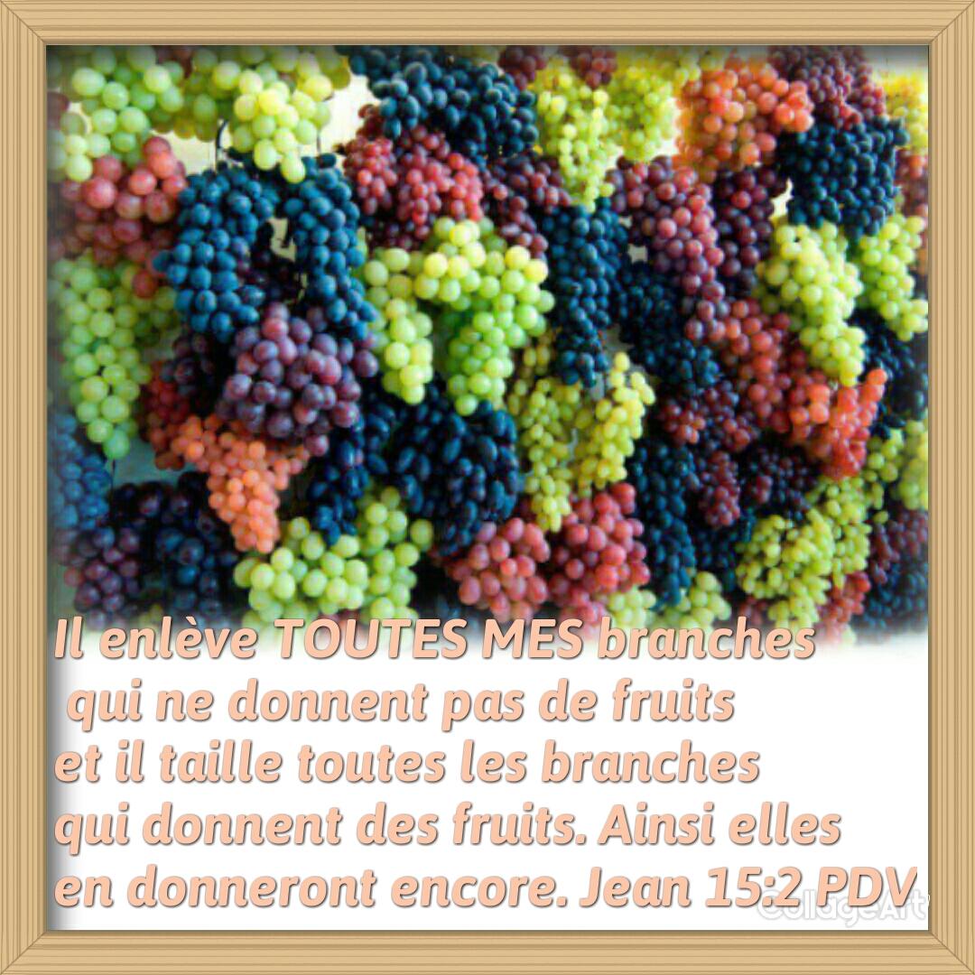 7bonne nouvelle le cep et les sarments for Portent fruit
