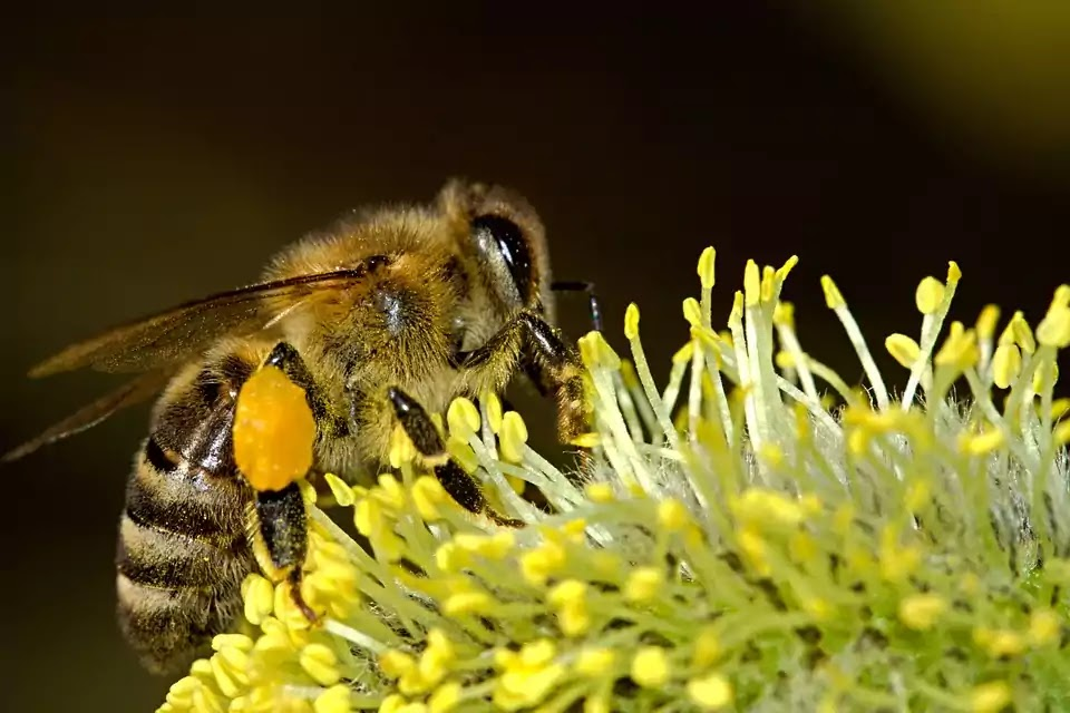 Bees Love Dandelions, According To Science