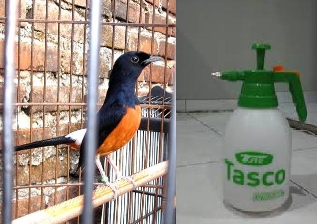 Banyak para kicau mania pemula yang bertanya bagaimana  Cara Memandikan Burung Dengan Benar