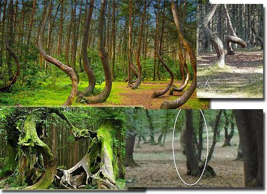 Lugares Assombrados - Floresta Hoia Baciu - Romênia