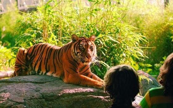 Zoologico-na-Holanda-Zoo