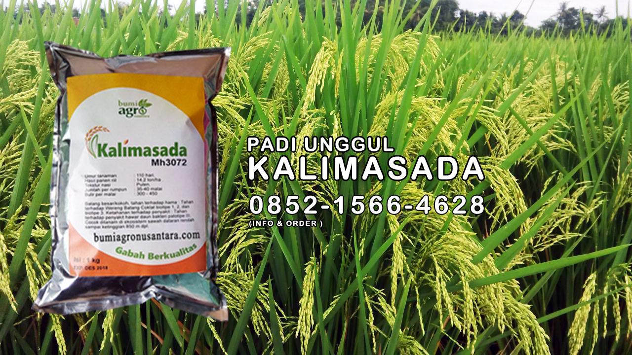 Kemasan Baru Benih Padi Unggul Kalimasada | Bumi Agro Nusantara