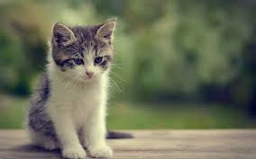 New Baby Cats Animal Hd Wallpaper29