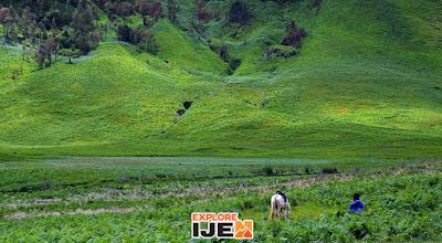 bukit teletubbies atau savana bromo