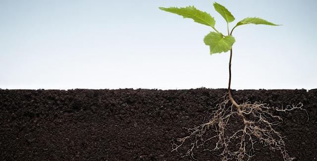 Nutricion mineral en las plantas y biologia