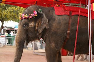 elephant for festival