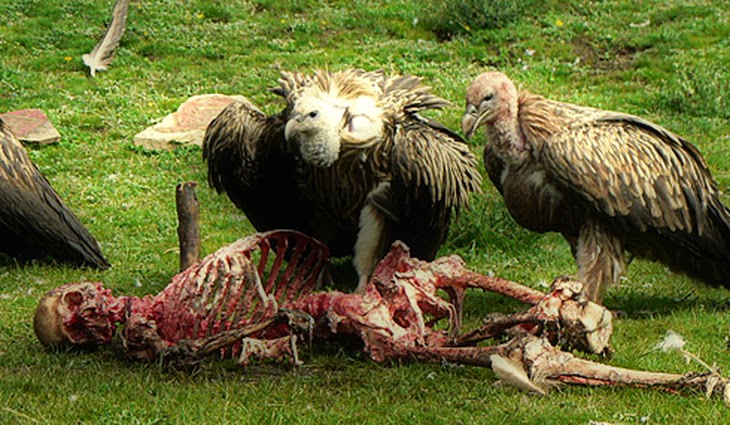 Sky Burial In Tibet, The World's Most Terrible Funeral