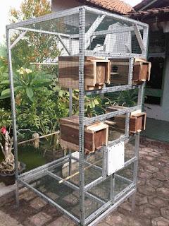 Cara Membuat Kandang Ternak Lovebird yang Baik