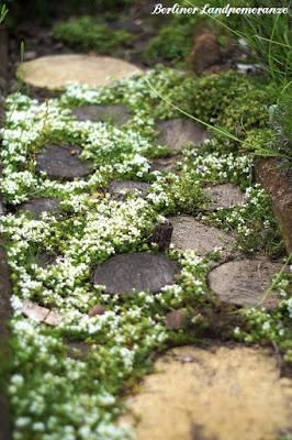 Garten-Wandelpfad: Polsterthymian