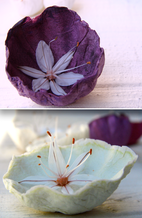 Asfodelo e fiori di carta verde menta e marsala by Alessandra Fabre Repetto