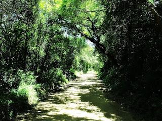 Estrada de Terra para a Barragem - Parque Saint Hilaire, Viamão