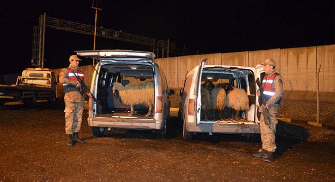 Bismil'de Jandarmadan kaçan araçlarda çalıntı koyunlar bulundu