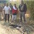 सड़क किनारे घायल अवस्था में पाया गया काला हिरण