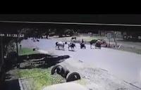 Kung fu bò