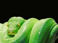 82 Fakta Ular yang menarik Untuk Menambah Wawasan
