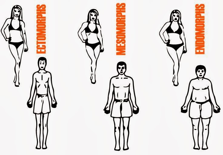 In Shape Endomorph Women