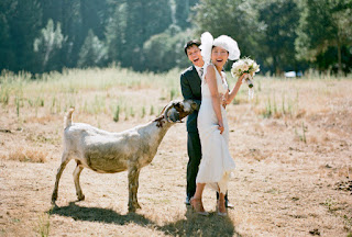 Avoid-Bringing-Pet-at-Your-Wedding