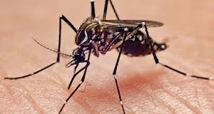 Fakta dan Mitos Nyamuk Menurut Joseph Conlon Pengendali Nyamuk Amerika