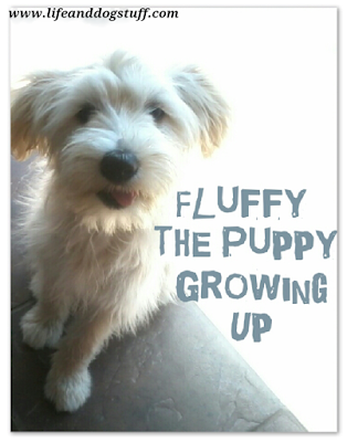 Fluffy the Puppy Growing Up