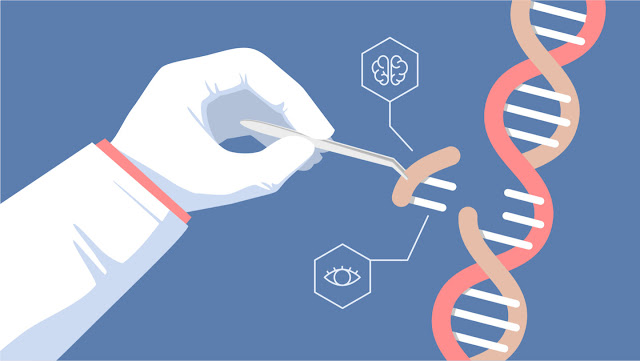 Gen: Pengertian Gen, Komponen Penyusun, Tipe, dan Fungsi Serta Sifatnya