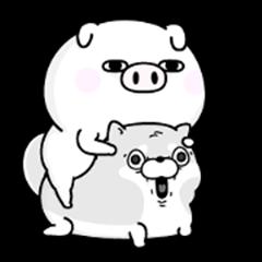Pig 100% keigo