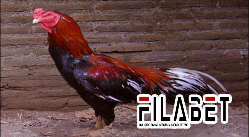 83+ Gambar Ayam Tidur Songgo Bumi Paling Keren
