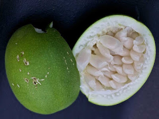 Maypop Fruit pictures